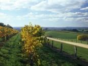 ATDW_Landscape__AX78_Cabernet__Lane_2